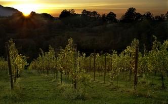 Filari al tramonto - foto fonte web