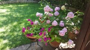 Antica Osteria Marconi, i fiori in giardino