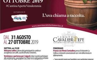 Cantine Aperte in Vendemmia 2019 alla Tenuta Cavalier Pepe