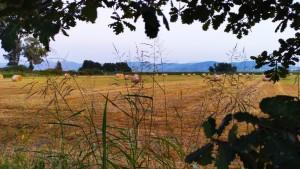Caseificio Jemma, foraggi